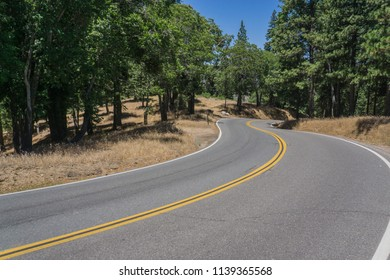 Road winds through dense green forest in the San Bernardino National Forest.