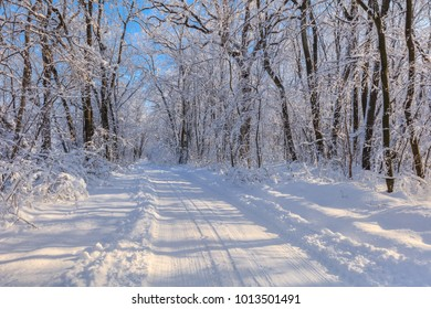 road in winter. Location: Comana Natural Park, Romania.