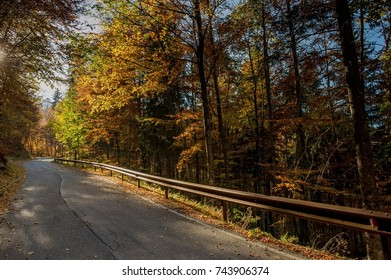road in the woods in the fall