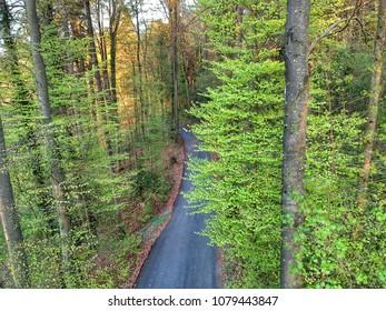 Road in the woods - Winterthur, Switzerland 2018