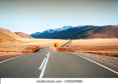 Road with yellow tree in autumn mountains. Chuysky tract in Altai Republic, Siberia, Russia