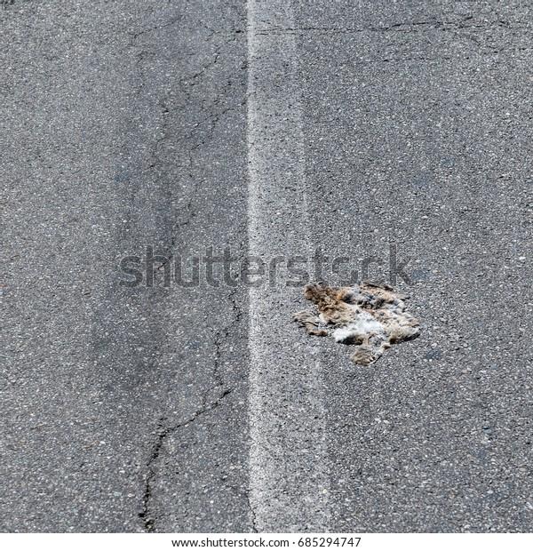 Roadkill on road