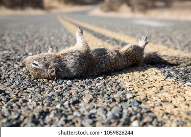 Roadkill on road lines at high noon