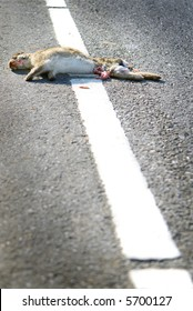 roadkill of wild rabbit or hare on asphalt