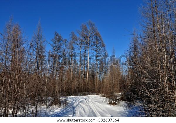 Roads in the taiga. Amur region. Russia.