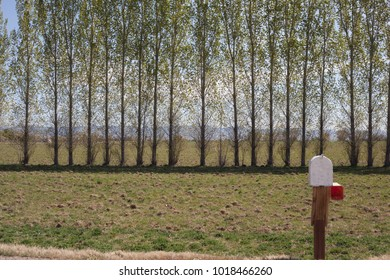A roadside country mailbox with a row of spring windbreak trees