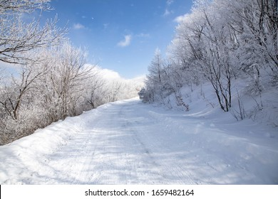 Roadside forest scenery with white snow on trees
