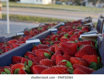 Roadside strawberry stand in central Florida.