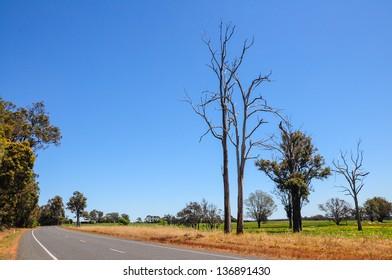 Roadside view on spring design in Western Australia.