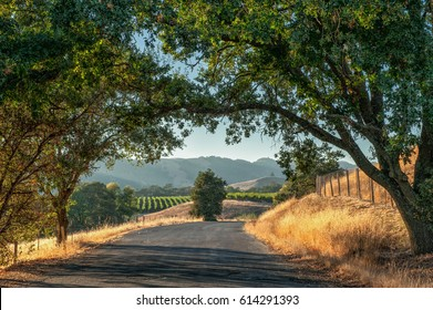 Roadtrip in Sonoma County wine country, California, USA