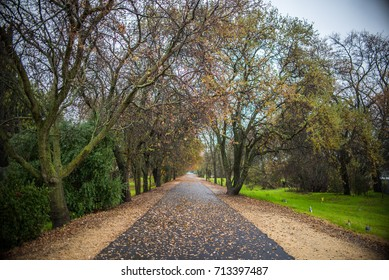 Roadway through the Forest