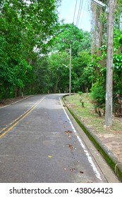 Roadway with tree