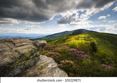 Roan Mountain Highlands landscape with rhododendron flowers during NC Spring Blooms at Jane Bald along the Appalachian Trail
