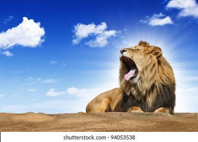 roaring lion under blue syk