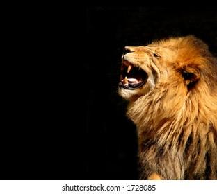 Roaring Lion-Horizontal Orientation