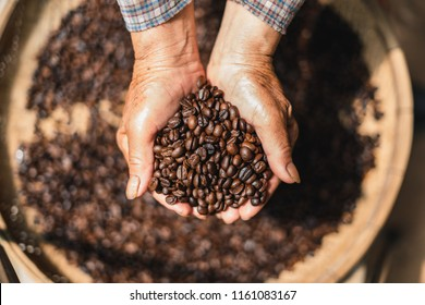 Roasted coffee Arabica coffee quality In the hands of the farmer
