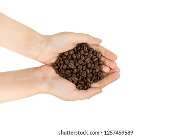 Roasted coffee beans in female hands, close up, isolated. Delicious raw Indian Arabica coffee beans.