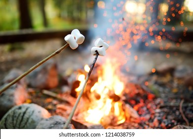 Roasting marshmallows on stick at bonfire. Having fun at camp fire. Camping in fall forest.