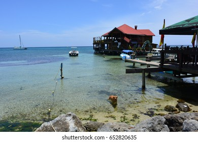ROATAN ISLAND, HONDURAS - MAY 29TH, 2017: Dog swimming at the beautiful caribbean beach of West Bay in Roatan island, Honduras, on May 29th, 2017