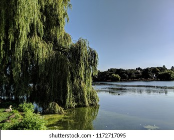 Roath park, natural haven, Cardiff, Wales, UK