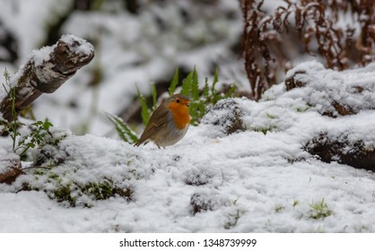 Robin Bird Europe