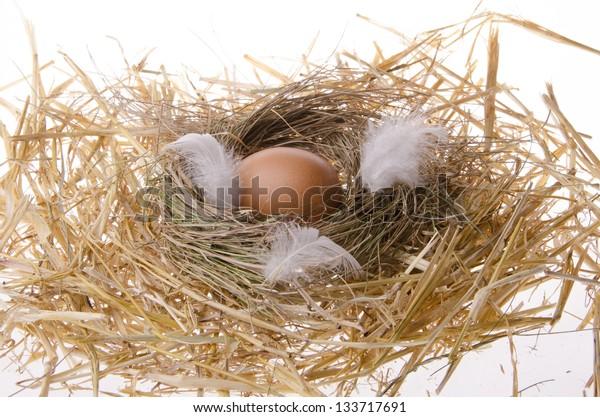 robin eggs on straw