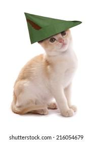 robin hood kitten