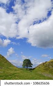 Robin Hood tree, Sycamore Gap, Northumberland