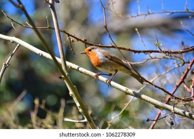 a robin on a twig on a nice sunny day