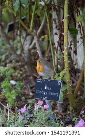 Robin proudly sitting on a sign