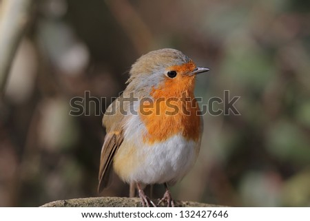 Breast up birds