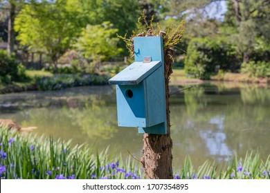 Robins egg blue painted birdhouse beside a pond, spring scenery, bluebird house, horizontal aspect