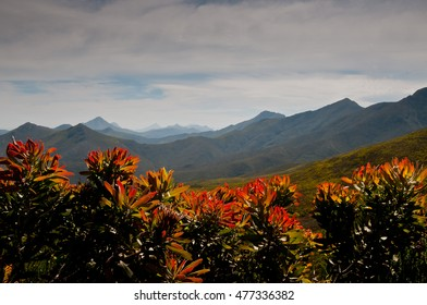 Robinson Pass framed by red and orange protea flowers