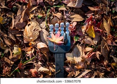 Robot hand touching fallen leaves