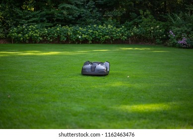 Robot mown lawer on lawn