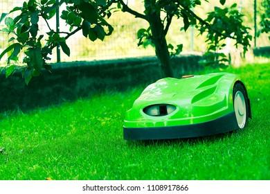 Robotic lawn mower mows the lawn in a garden