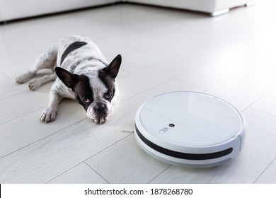 Robotic vacuum cleaner hoovering home with dog lying on the floor