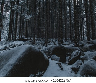 Rock chunks and a snow-covered ground in a spruce forest in the Harz mountains in Germany