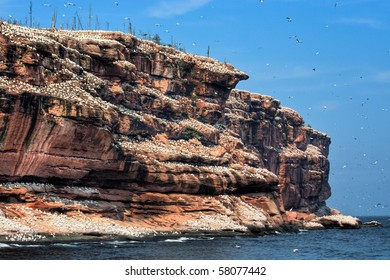 Rock cliff covered with Northern Gannets and Common Murres. Bonaventure Island, Quebec, Canada gaspesie