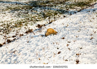 Rock coming out of the snow, horizontal image