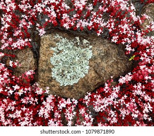 Rock covered with lichen and surrounded by red diamorpha