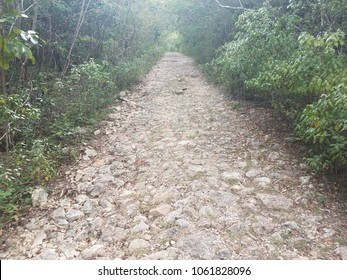 rock and dirt trail in dry forest in Guanica Puerto Rico