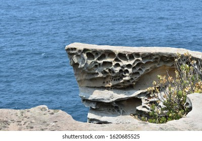 rock erosion at Watsons bay, Sydney