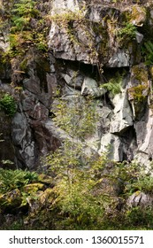 The rock face of an east Devon quarry comprising of Permian volcanic rock, South West England, United Kingdom.