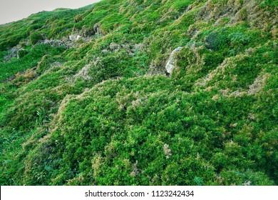 Rock with flowering slopes