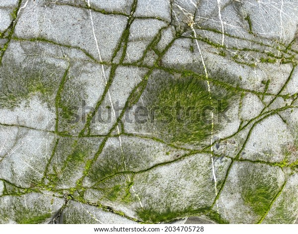 a rock formation with stone cracks and lush sea moss growth
