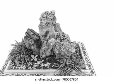 Rock garden arrangement in large pots.