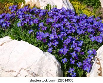 Superbe Rock Garden Flowers