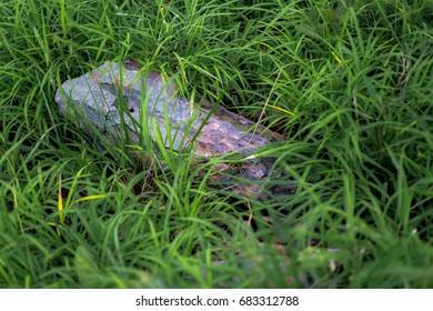 rock in grass green