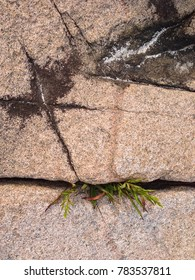 Rock growing out of grass in coastal area of Acadia National Park in Maine